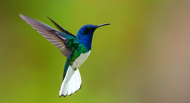 Hummingbird - The most seen bird in Pipa