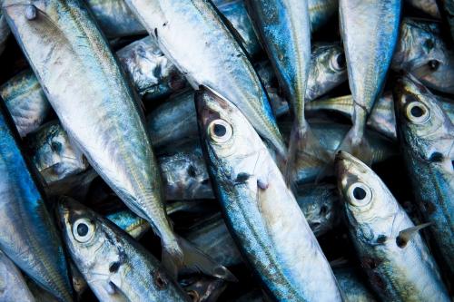 Fish, a nutritional banquet.