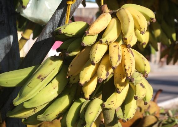 Banana -  Tipos, beneficios y recetas de esta delicia brasileña
