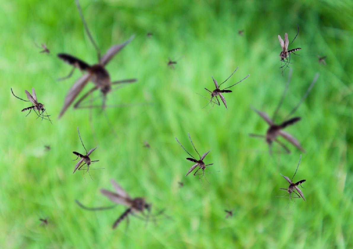 Dengue, la lucha es de todos.
