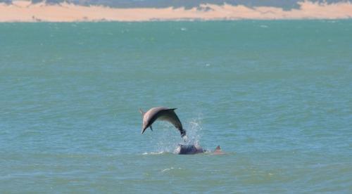¡La playa de Baía dos Golfinhos votada entre las 10 mejores playas del mundo!